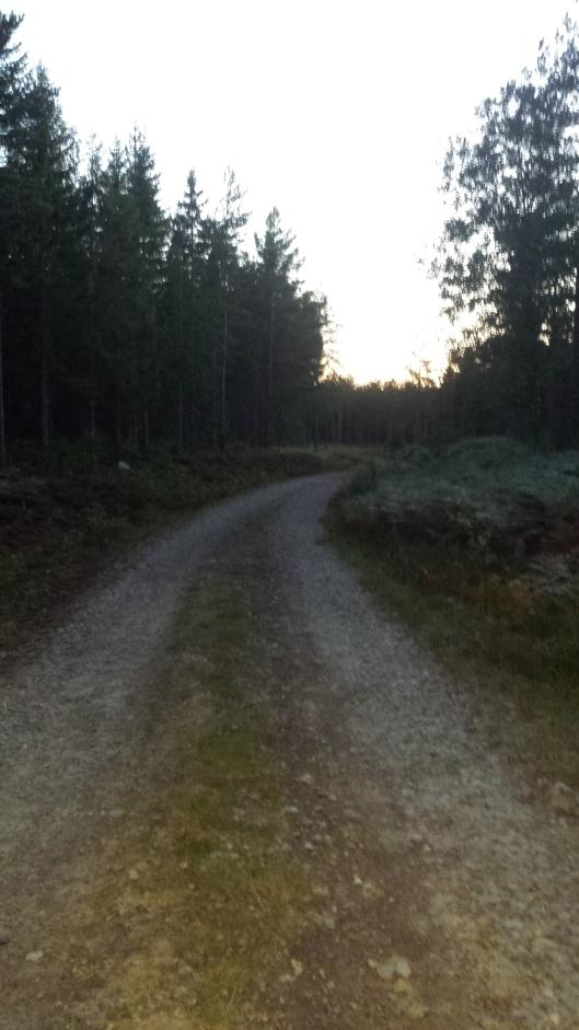 Det börjar skymma i skogen