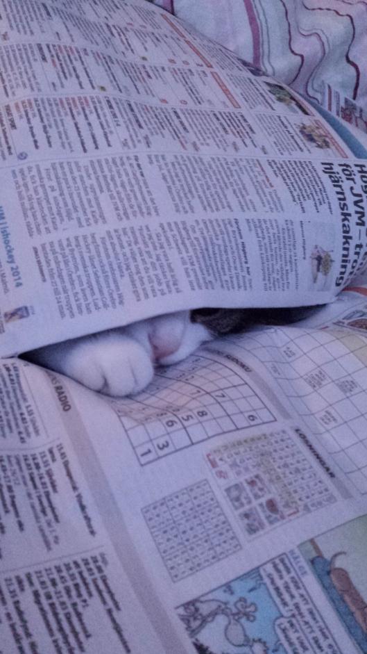 Rufsan och jag läser tidningen i sängen